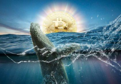 نهنگ بیتکوین 420x294 - آموزش ارز دیجیتال
