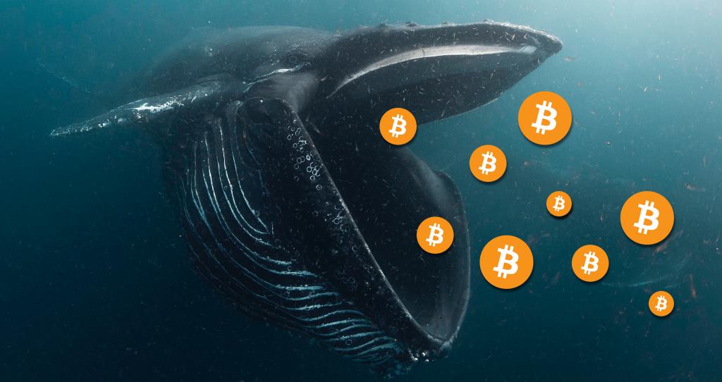 bitcoin whale 1 1024x542 - آموزش ارز دیجیتال