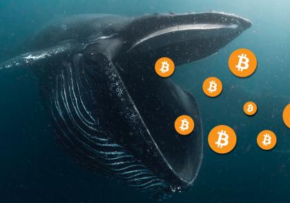 bitcoin whale 1 420x294 - آموزش ارز دیجیتال
