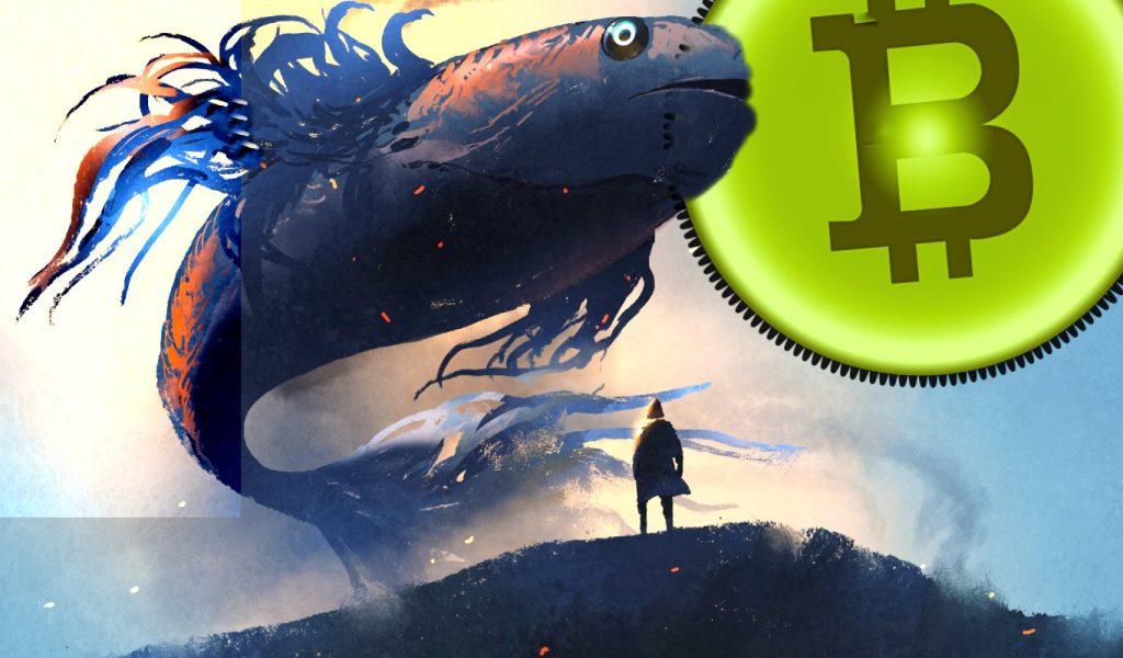 نهنگ 1 1024x600 - آموزش ارز دیجیتال