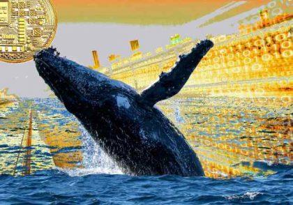 whale crash 1 1 420x294 - آموزش ارز دیجیتال