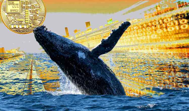 whale crash 1 1 - نهنگ ها به آرامی در حال ذخیره ی ارز SUSHI هستند!