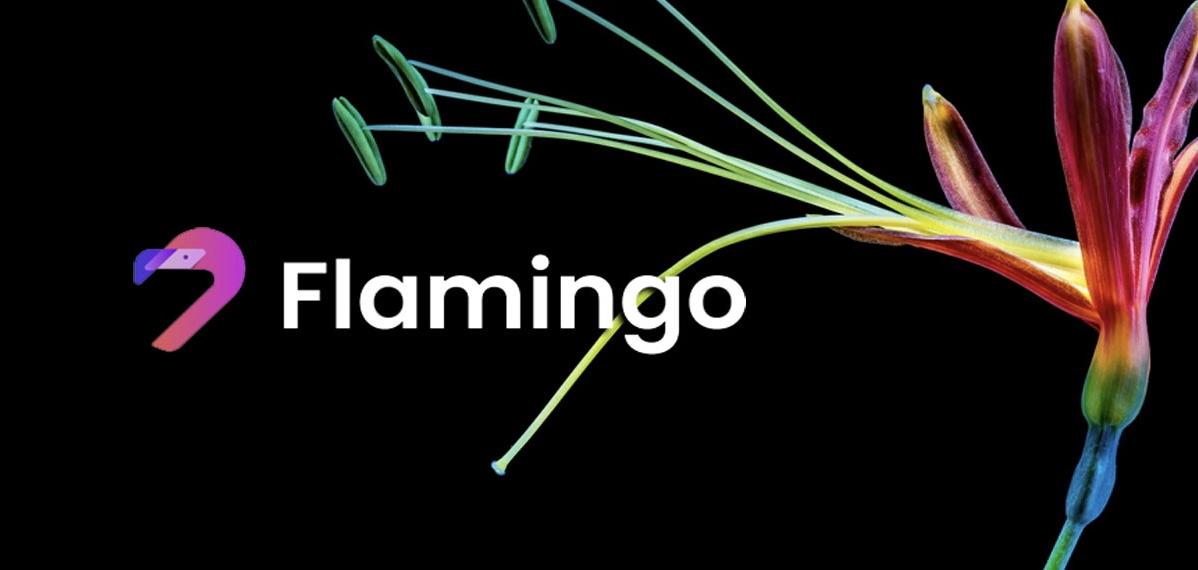 756D01BB 3A88 4BBE 82CB 3868621D7F43 - معرفی بنیانگذار Flamingo