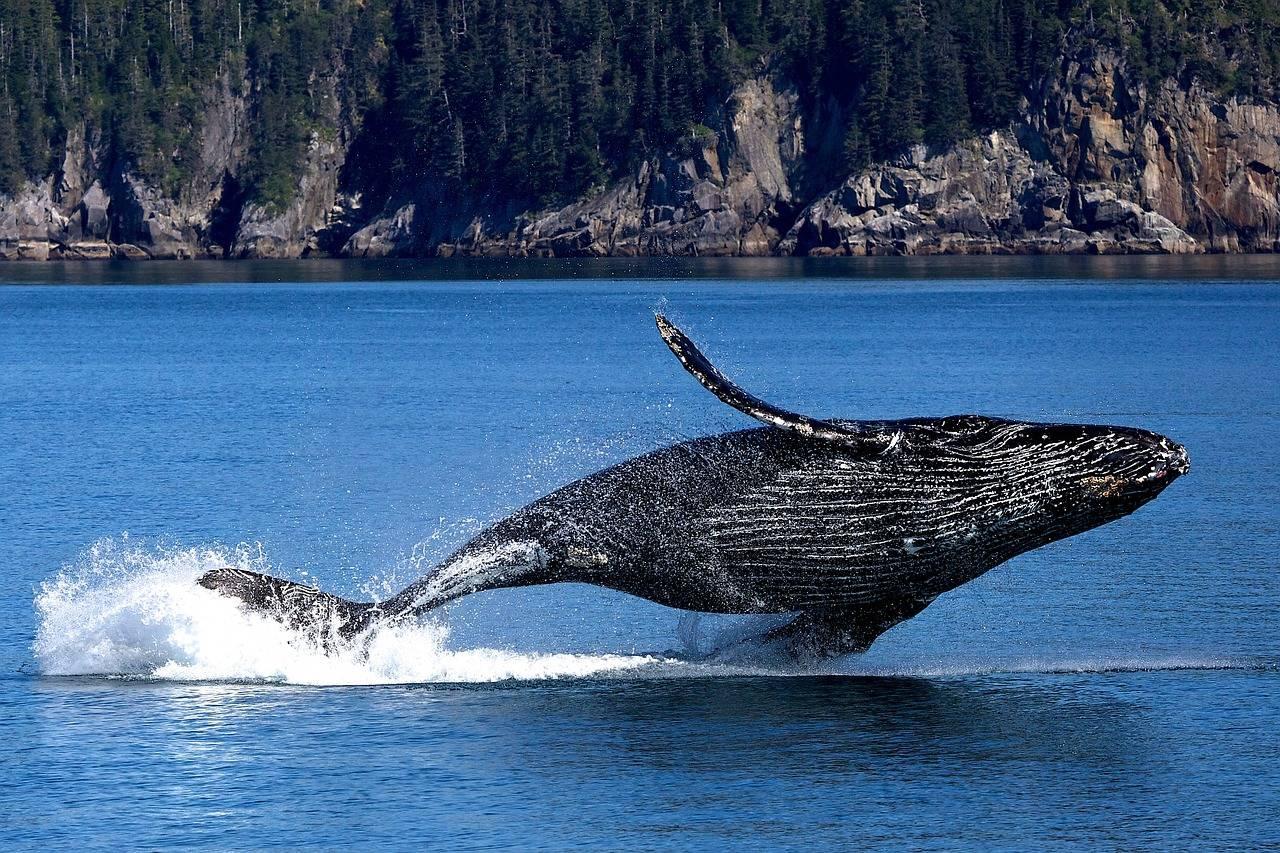 whales of bitcoin - نهنگ های بیت کوین در 5 روز گذشته معادل 3 میلیارد دلار بیت کوین فروختند