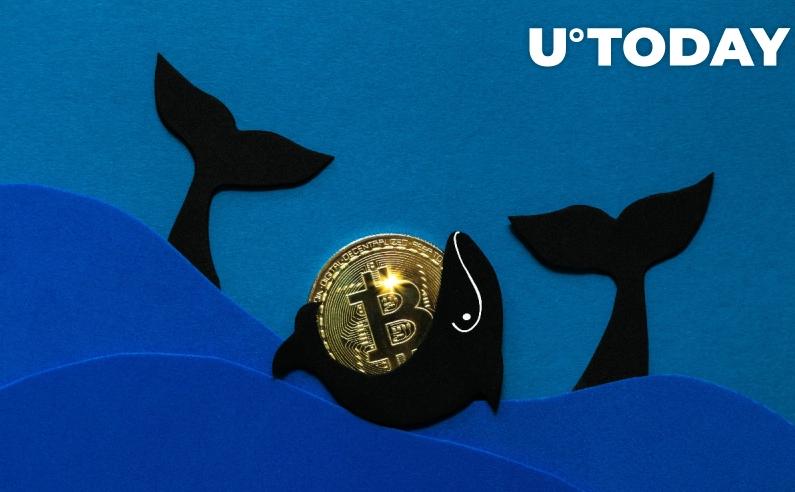 Biggest Bitcoin Wallets with 100K 1 Million - بزرگترین کیف پول های بیت کوین در 27 ماه گذشته با 100 هزار تا یک میلیون سکه در اوج هستند